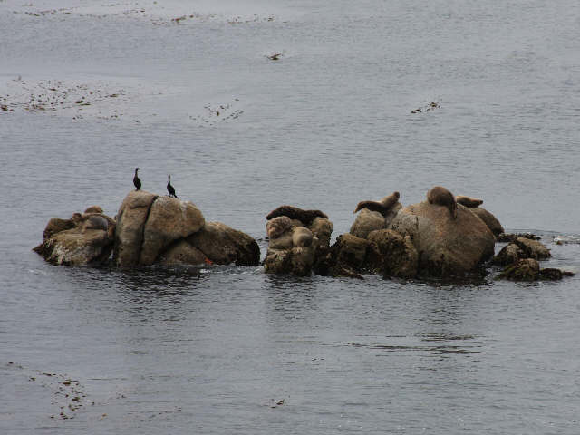 Seals and seabirds