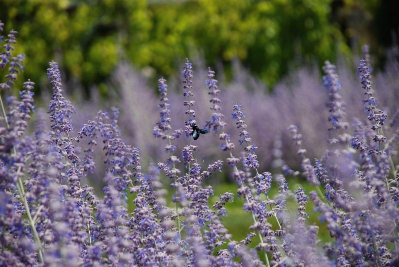 Insecto entre las flores