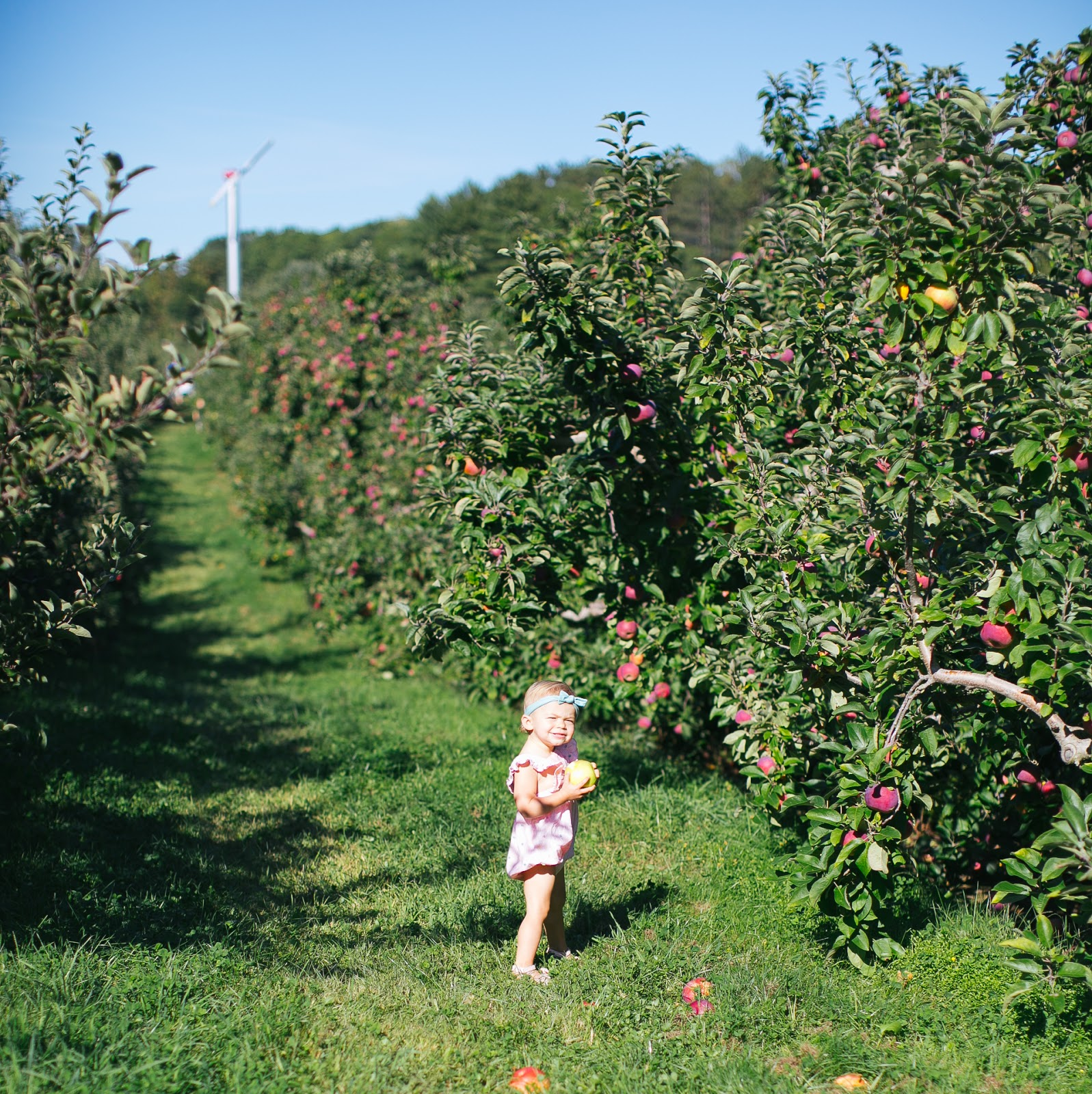 Fall traditions cranberry festival apple picking for Where can i go apple picking near me