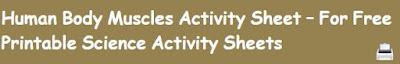free muscular system worksheet
