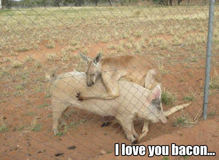 30 Funny animal captions - part 60, cute animal pictures with captions, funny caption pics