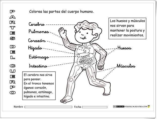 """""""El cuerpo humano por dentro"""" (Fichas de Ciencias Naturales de Primaria)"""