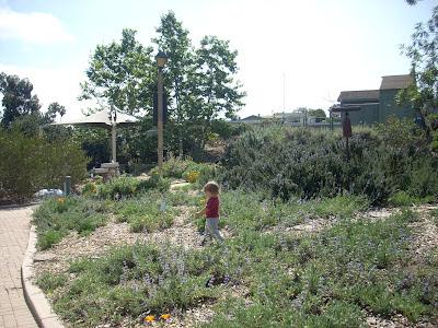 Jennifer arrow 39 s blog park day polliwog park manhattan - Manhattan beach botanical garden ...