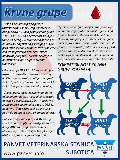 Krvne grupe kod pasa značajne za transfuziju