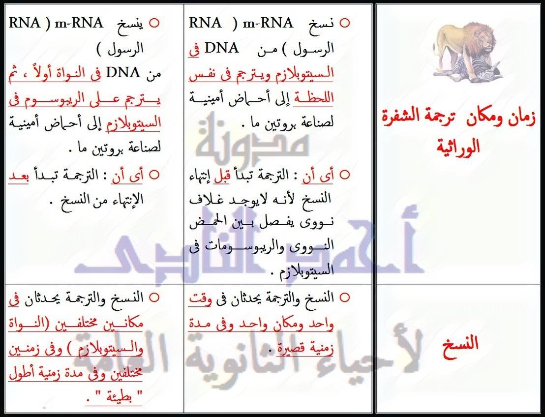 مقارنة بين DNA فى أوليات النواة و DNA فى حقيقيات النواة  -المحتوى الجينى