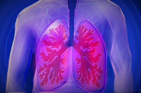 The human lungs