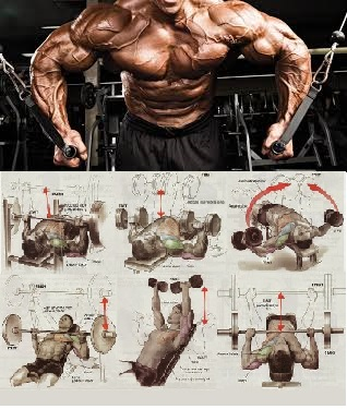 Chest Workout for Massive Pecs