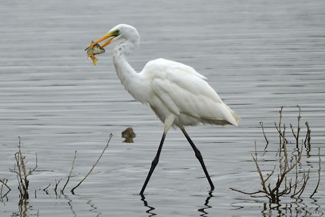 Au temps qui passe, saisir l'instant: Les oiseaux blancs.