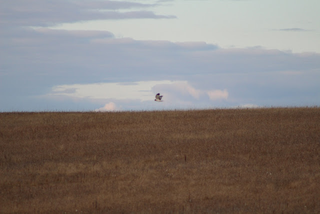 Bird in flight above field