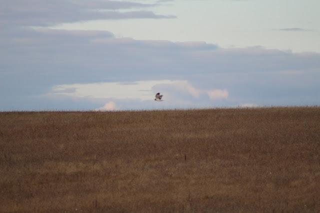 Bird in flight above field