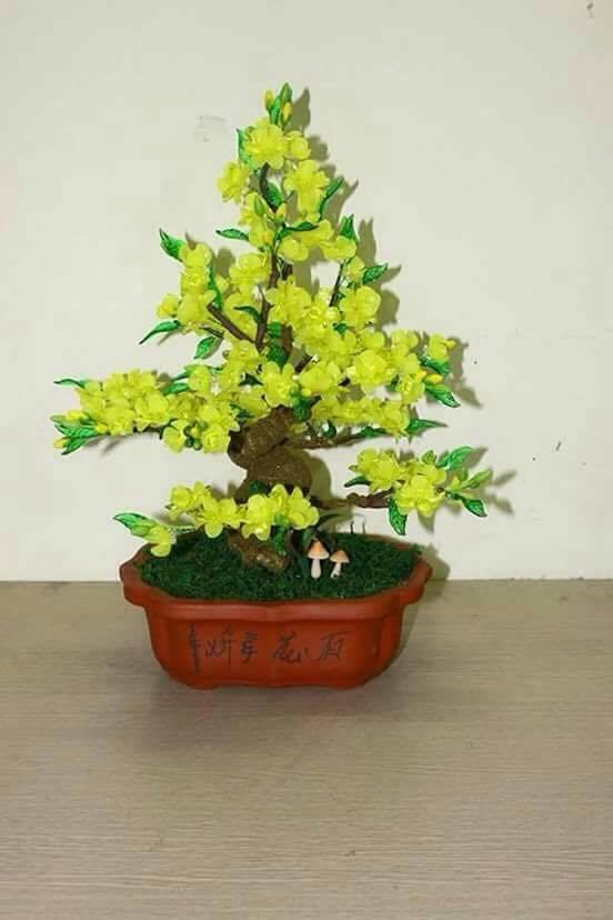 Goc bonsai mai dao o Quynh Loi