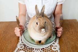 You Must Know Of The Amazing Benefits and Efficacy of Rabbits Meat  for Body Health - Healthy T1ps