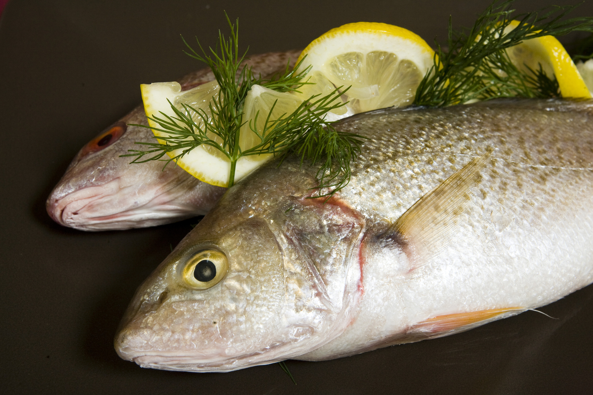 Polish classic cooking white fish in horseradish sauce for Cooking white fish