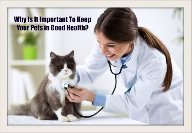 Why Is It Important To Keep Your Pets in Good Health?