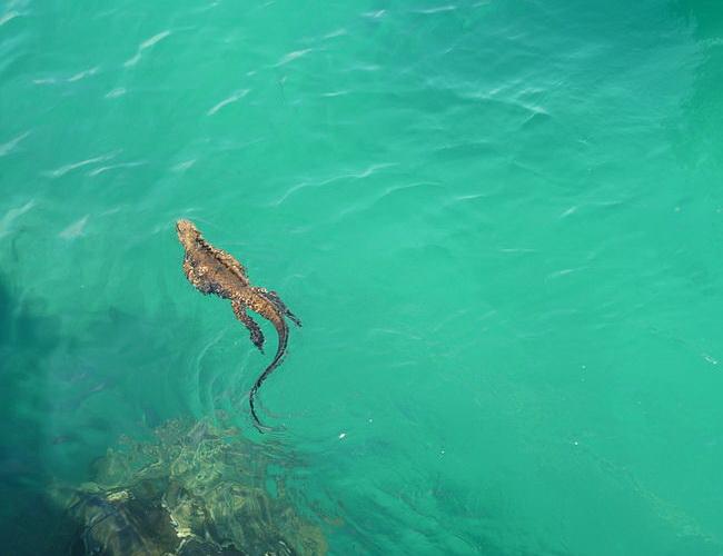 Xvlor Galápagos National Park