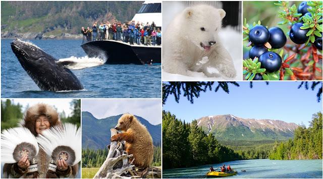 Wilflife of Alaska