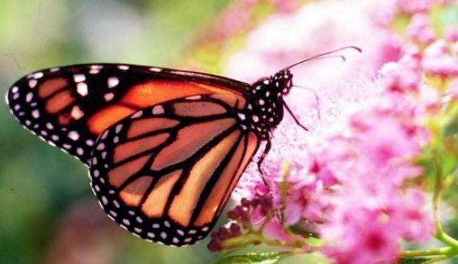 Το δίδαγμα της πεταλούδας!