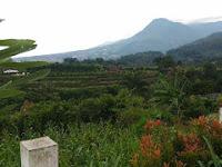 Gunungsari Desa Seribu Mawar