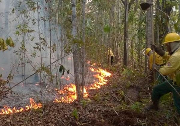 Incêndio em Santa Cruz Cabrália. Foto: Ascom/ Santa Cruz de Cabrália