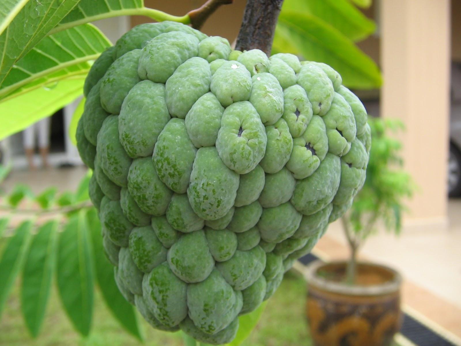 Get Much Information: Fruits - 1