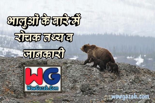 भालुओं से जुड़े रोचक तथ्य (Interesting Facts About Bear in Hindi)