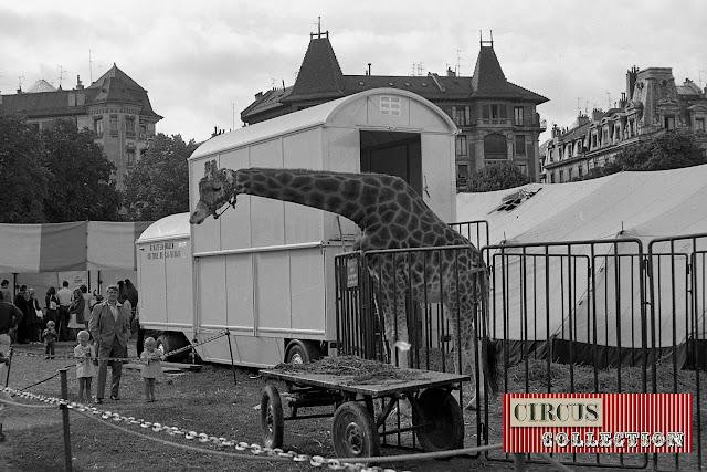 Zoo et roulotte de la girafe du Cirque National Suisse Knie  1970