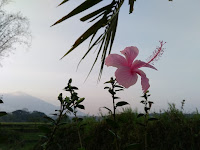 Bunga..Hasil Kamera Hisense Pureshot