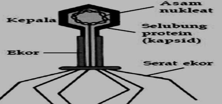 Ciri-Ciri, Struktur, Bentuk dan Ukuran Virus
