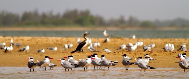 Aves migratorias y biologia