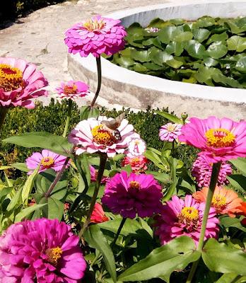 Цветущий ботанический сад в Балчике