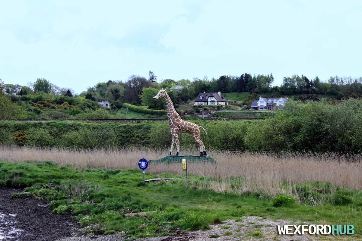Giraffe in Ferrycarrig