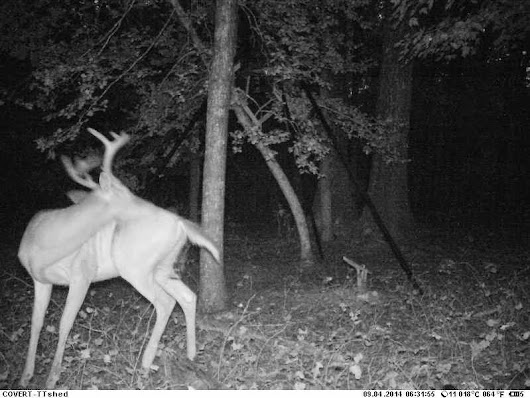 Cellular Trail Camera Goodness