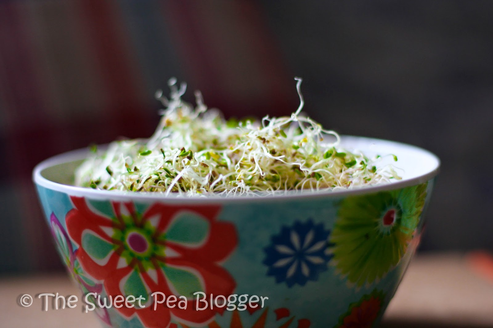 A DIY Guide to Growing Alfalfa Sprouts