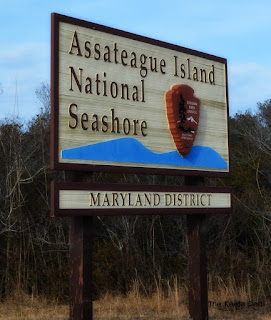 Assateague Island national Seashore Maryland