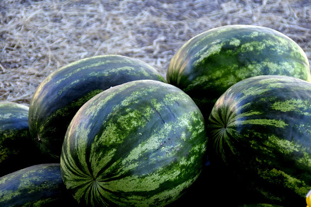 round watermelons
