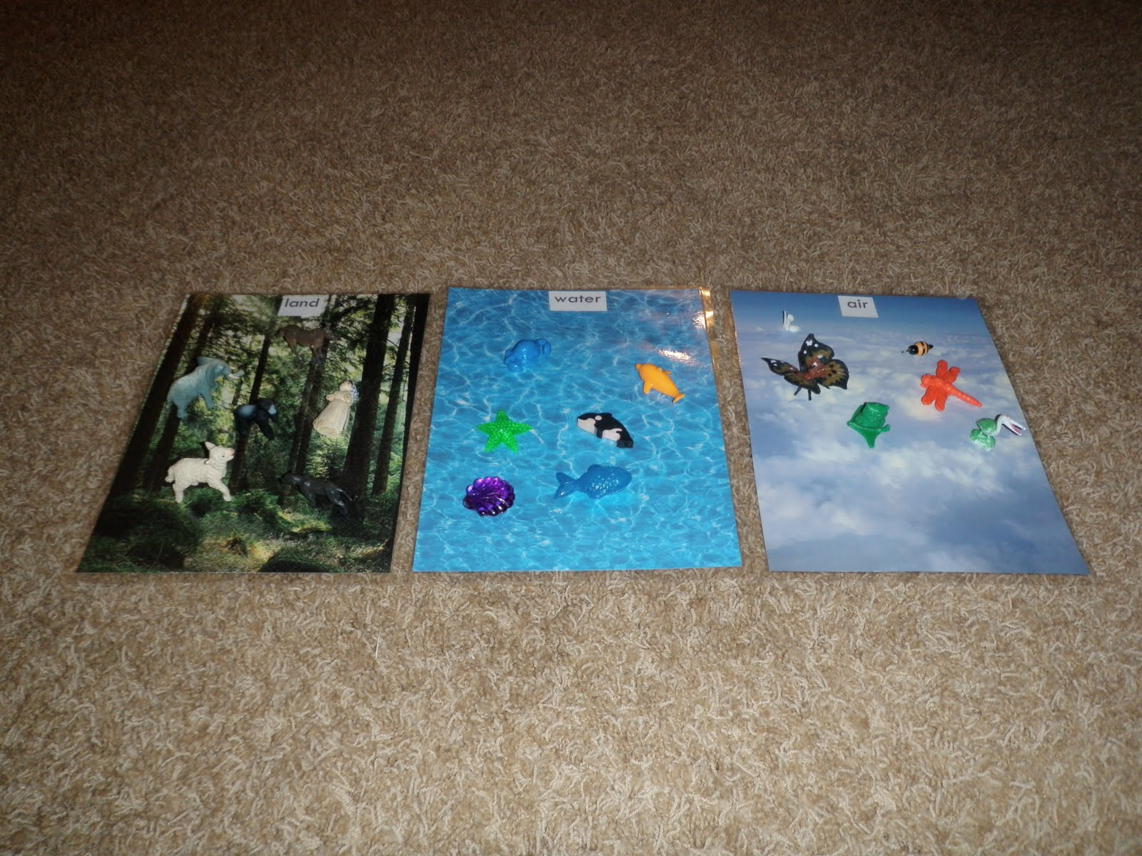 Montessori Design Land Water Air Sorting