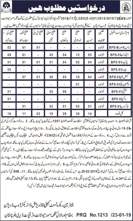 Balochistan jobs 2019