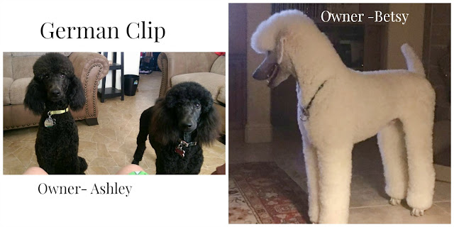 Poodles in German Clips