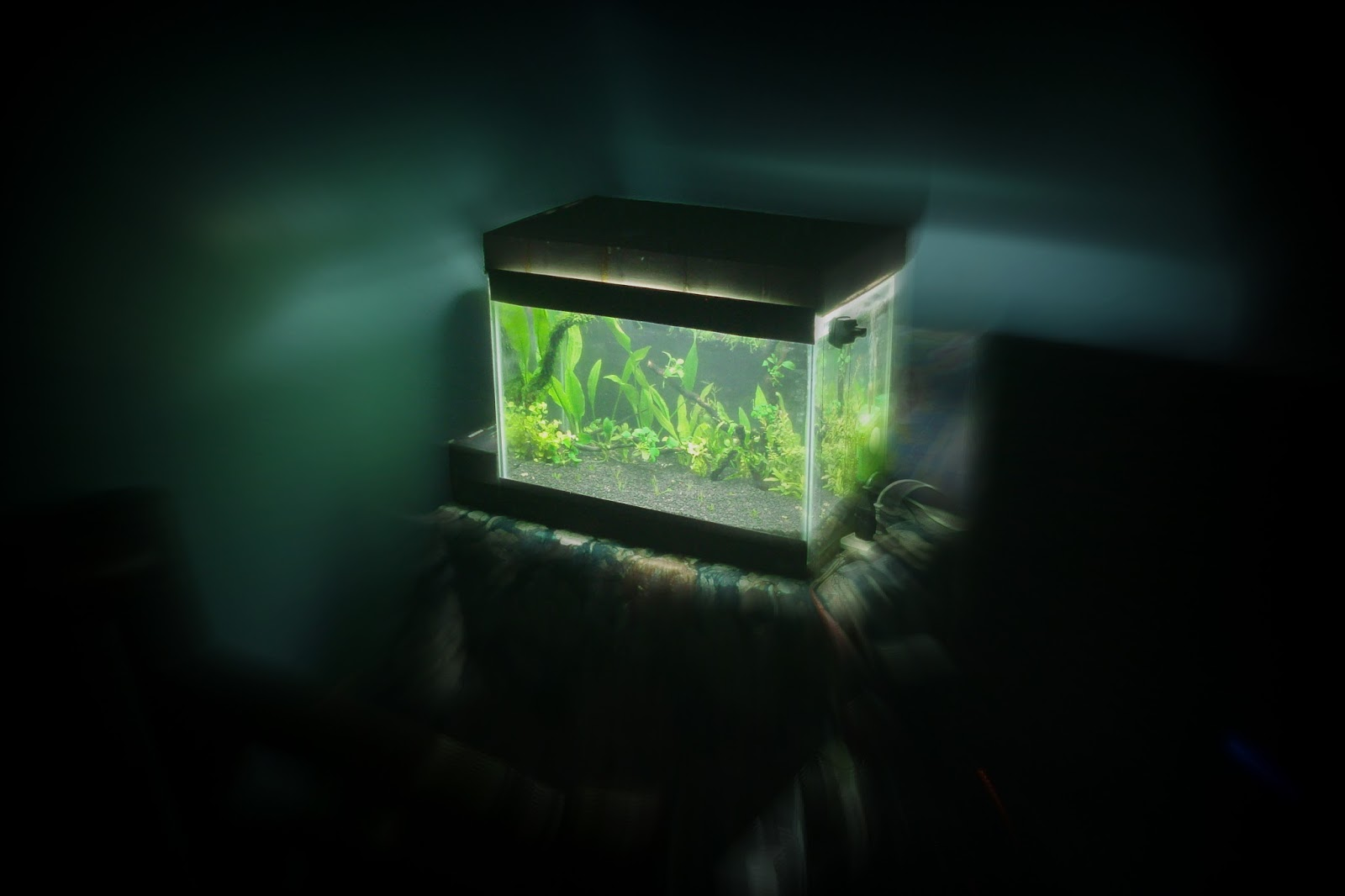 DIY - How to Make a Glass Aquarium