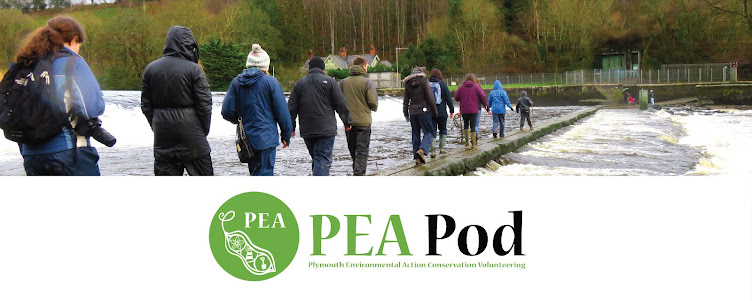 PEA POD-Plymouth Environmental Action Conservation Volunteering.