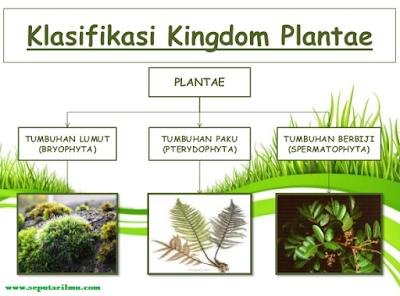 Pengertian, Klasifikasi, Jenis-Jenis Dan 7 Ciri-Ciri Kingdom Plantae (Tumbuhan) Beserta Contohnya Menurut Para Ahli Biologi