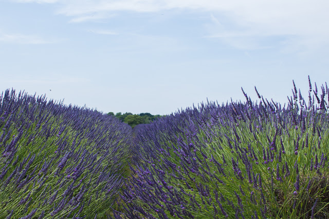 Mayfields Lavender Farm on Pull Down The Moon