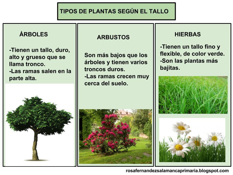 maestra de primaria las plantas partes de las plantas
