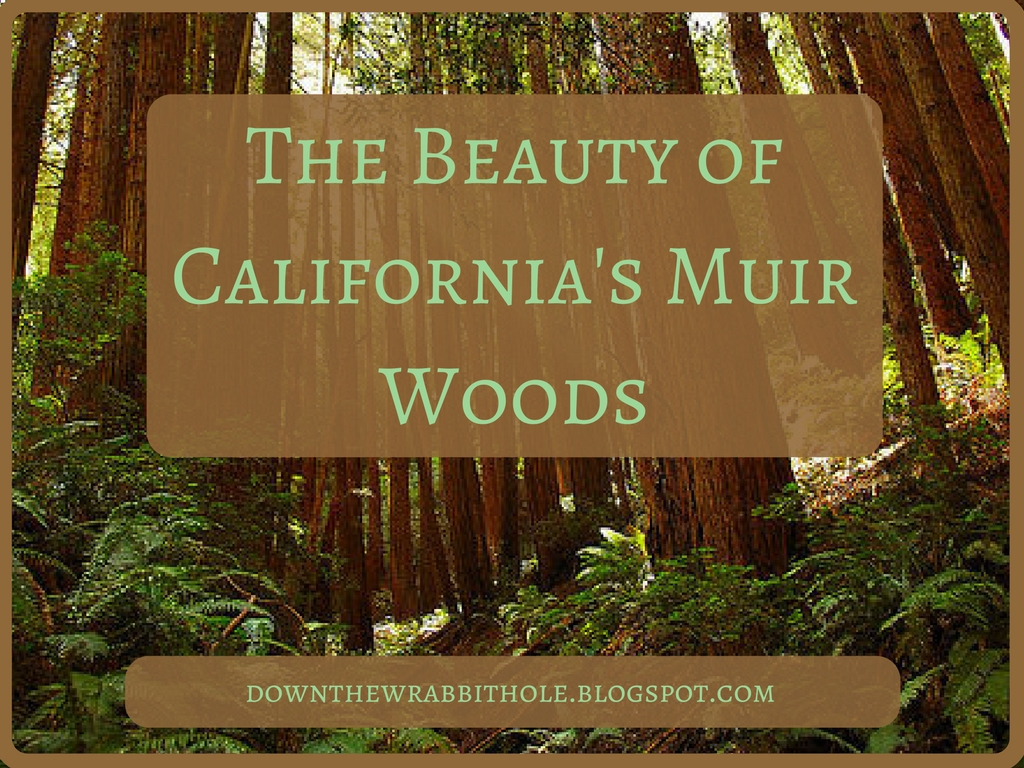 my trip to muir woods essay 9 john muir quotes to live by how many hearts with warm red blood in them are beating under cover of the woods, and how many teeth and eyes are shining travel journal: sailing the greek islands with bearing true south.