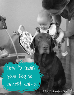 How to train your dog to accept babies and children with three steps.