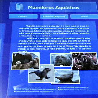 Mamíferos Aquáticos (Museu de Ciência e Tecnologia da PUCRS)