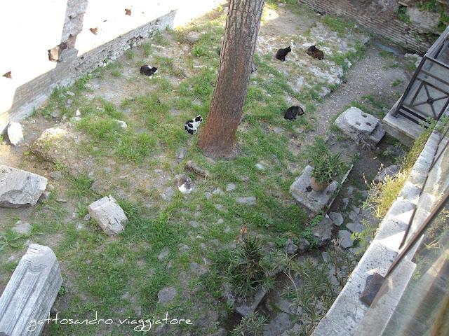 Colonia felina di  Torre Argentina
