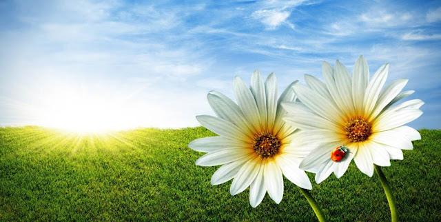 Flores, mariquita y Biologia