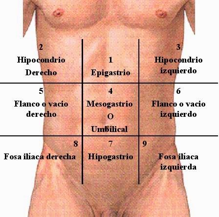 Distribución por cuadrantes del abdomen