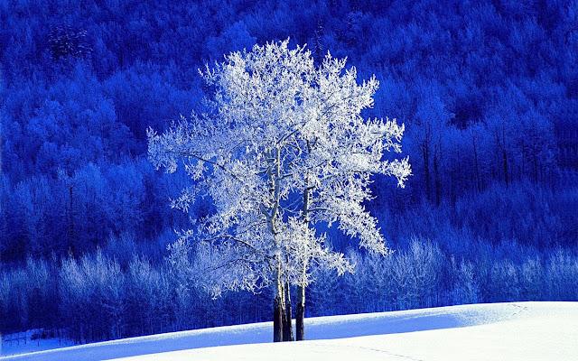 Kış ve Ağaç